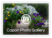 Capon Photo Gallery